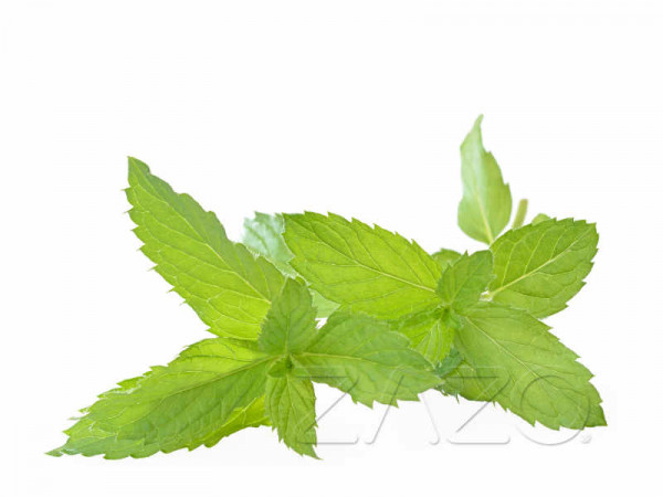 ZAZO-Peppermint-E-Liquid-10ml